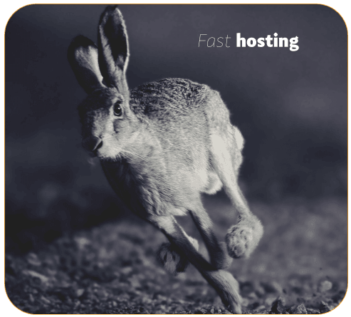 a-running-hare-fast-reliable-hosting